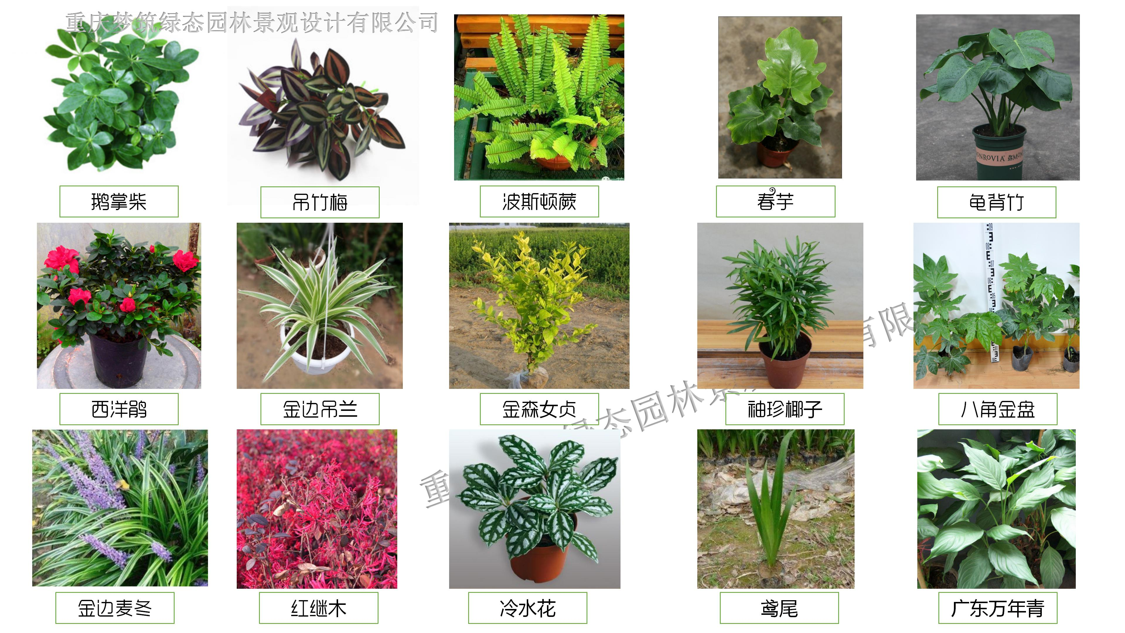 夢筑綠態垂直綠化植物品目.jpg